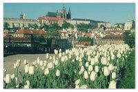 Отдых в Чехии на майские праздники.