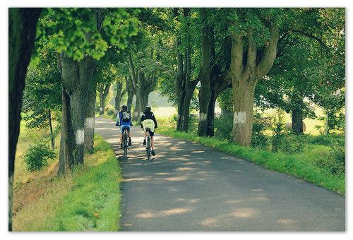 Для велосипедных прогулок здесь есть всё.