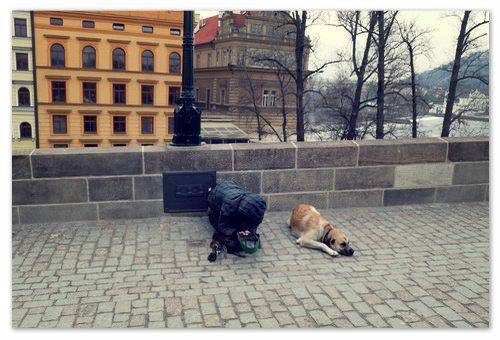 Попрошайка нищий в Праге с собакой просит милостыню на Карловом мосту.
