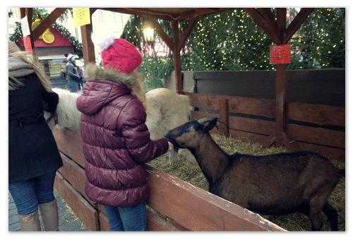 Чешская коза на Староместской площади.