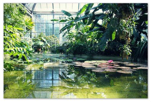 Ботанический сад в Праге.