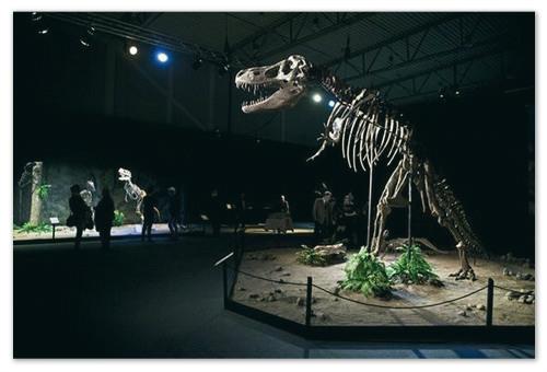 Сходите и посмотрите на скелеты динозавров.