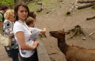 Пражский зоопарк: сэлфи с тигром — это только начало!
