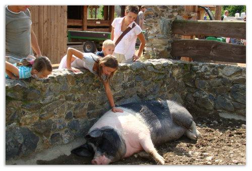 Девочка гладит свинью