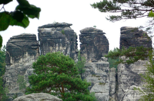 Деревья на скалах.