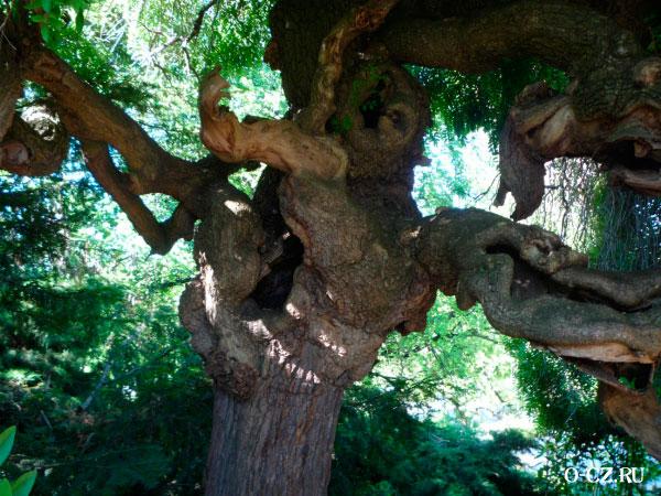 Причудливое дерево.